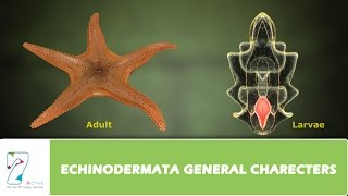 CH05-DIVERSITY IN ANIMAL KINGDOM-PART07-ECHINODERMATA