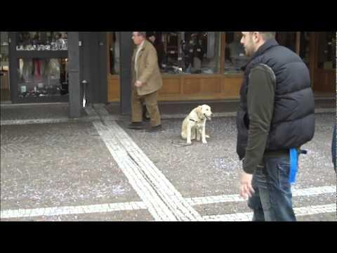 Tre cani educati al centro commerciale...