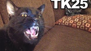 Talking Kitty Cat 25 - A Very Angry Kitty Cat
