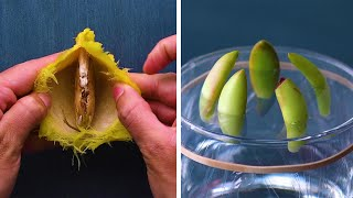 13 Genius Gardening Hacks That You'll Be Glad to Know! Blossom