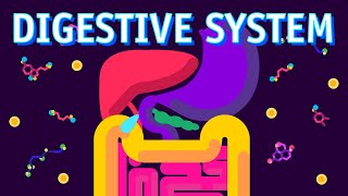 How our Digestive System Works?