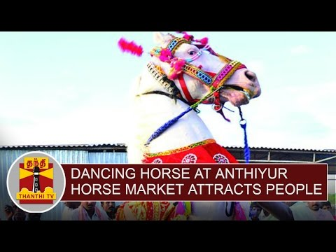 Dancing-Horse-at-Anthiyur-Horse-Market-attracts-People-Thanthi-TV