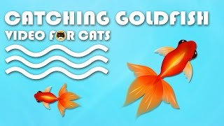 CAT GAMES FISH - Catching Goldfish! Fish Video for Cats to Watch.