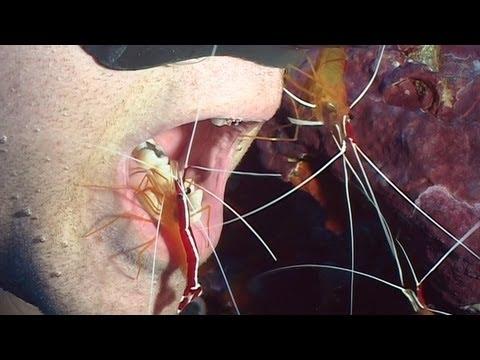 Heart parasites dirofilariasis