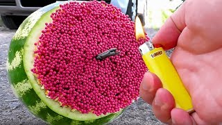 Incredible Watermelon Experiments