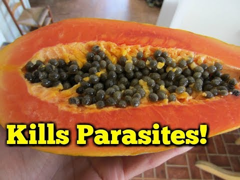 Parasites purification of Semenov