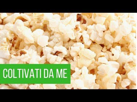 Coltivare mais da popcorn | Ecco i risultati | ORTO e GIARDINAGGIO