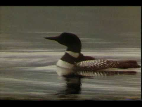, title : 'THE LOON