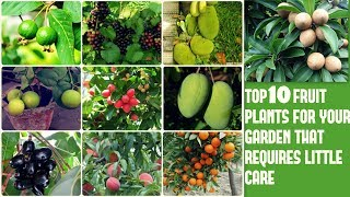 Top 10 Fruit Plants For Your Garden That Requires Little Care