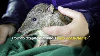 How do digging mammals help ecosystems?