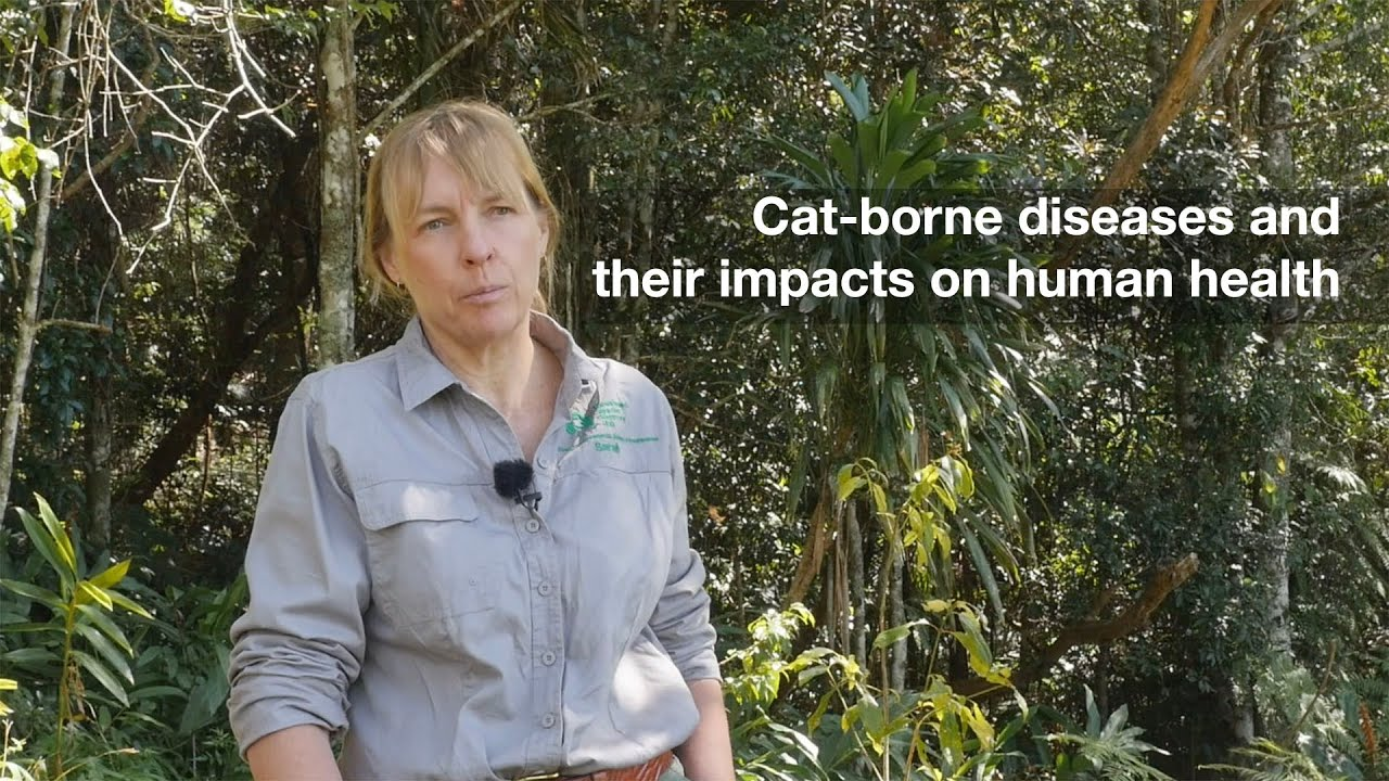 Cat-borne diseases and their impacts on human health