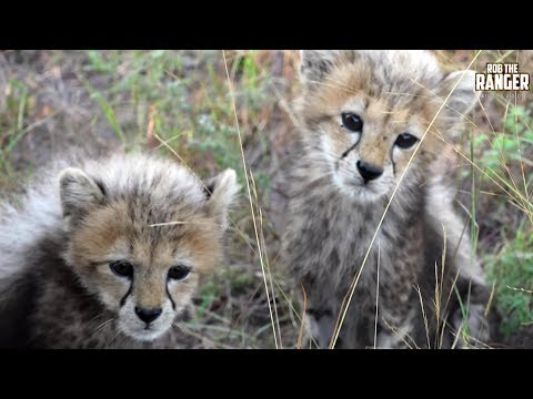 Cute Baby Wildlife Collection | Rob The Ranger Special Edition