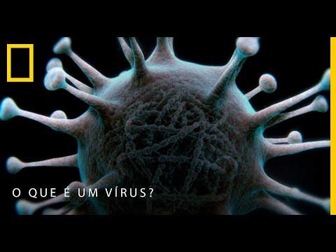 Papillomavirus transmissibles