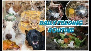 DAILY FEEDING ROUTINE FOR 30+ PETS! (FEEDING MY ANIMALS!)