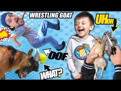 SHAWN CUTS CHICKEN FEATHERS & DAD ATTACKED BY GOAT! (Fv Family Vlog)