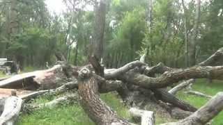 9. Реликтовый лес под музыку