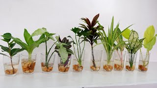 10 House Plants You Can Grow With Cuttings And A Glass Of Water For Indoor At Home