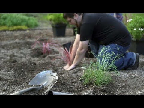Landscape Design & Maintenance video thumbnail