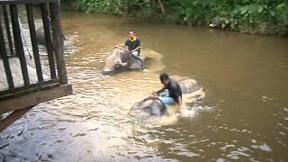 Gajah @ Kuala Gandah