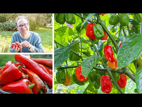 , title : 'Growing Peppers from Sowing to Harvest