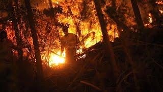 Catástrofe en Chile: 2.899 Km cuadrados de bosques fueron consumidos por el fuego