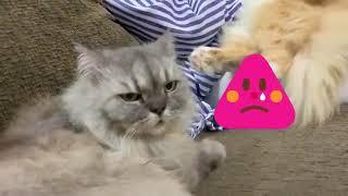 Pandainya kucing Zara zya ni...dah macam anak orang. Mummy cakap pun dia paham
