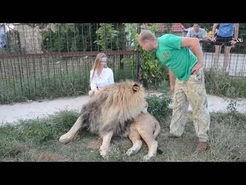 Фото с львом Марселем на память