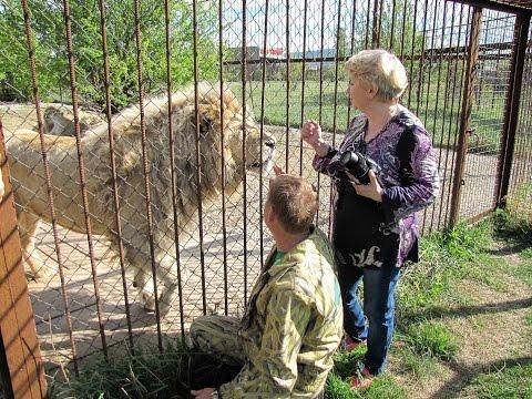 Наш первый день в парке львов Тайган