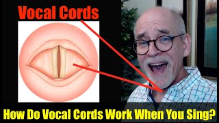 Ep.9: Singing Basics: How do Vocal Cords Work?