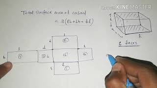 Total surface area of Cuboid | class10 math in hindi
