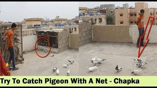 Pilka KIabootar Utra Chaht Par - Try To Catch Pigeon With Chapka Net