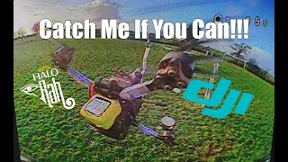 Catch Me If You Can - DJI HD FPV Racing - HaloRC Rah