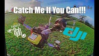 Catch Me If You Can - DJI HD FPV Racing - HaloRC Rah фото