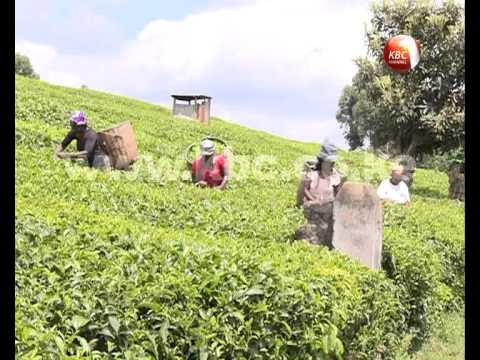 Land speculators a threat to Kenya's food security efforts