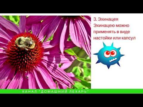 Цветков онколог травник новосибирск рак простаты советы