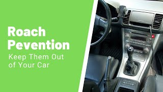 Roaches in Car – How to Get Rid of Roaches Inside Your Vehicle
