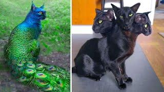 15 Abnormally Strange Cats That Actually Exist