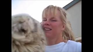 Funny Animal Videos:  Animals Kissing Girls Compilation