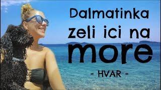 DALMATINKA ŽELI IĆI NA MORE /Hvar - Debela Barbara