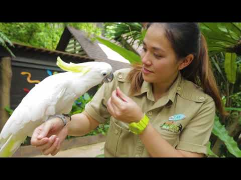 A Day in the Life Series: Dr Eve, Veterinarian at Sunway Lagoon