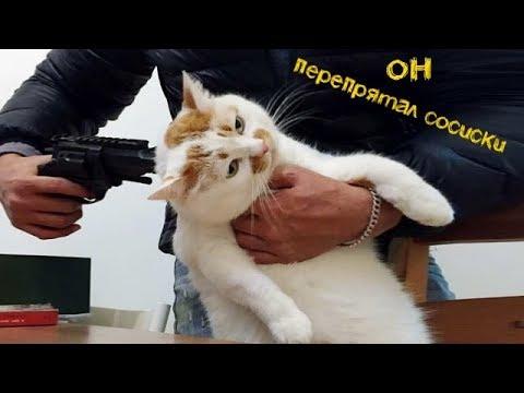 Смешные кошки и Смешные коты - обзор котов с летающим ёжиком (2019)