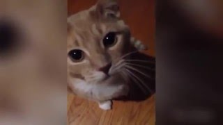 Боевые и ржачные кошки