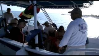 Entre Mares - Tiburón Ballena