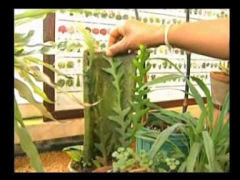 Finger halamang-singaw species paa