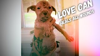 Little Puppy Tranforms with Foster Family 's Help - Love can Heals All Wounds