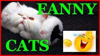 Funny cats/Смешные и прикольные коты. Смех до