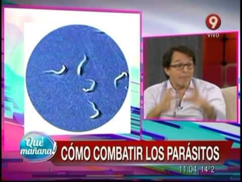 Giardia comportand panacur