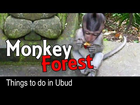 Monkey Forest Ubud, Bali - Indonesia