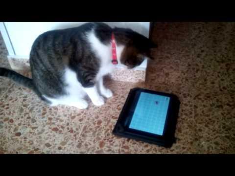 Video of Cat's Games