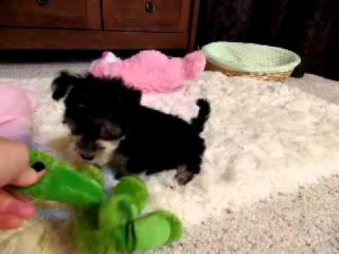 Princess is an adorable baby girl :